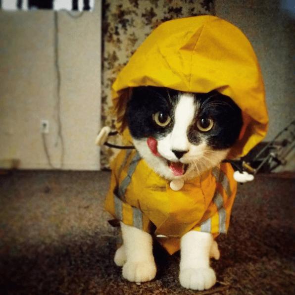 Image result for cat in raincoat