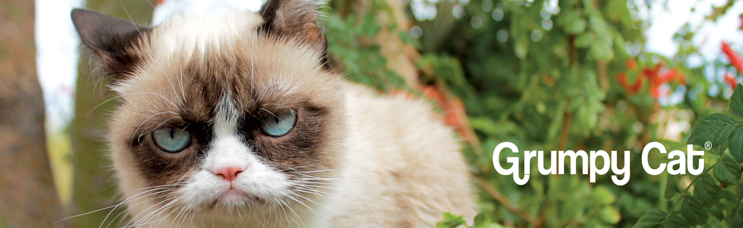 Mountain Tribe - Grumpy Cat - The Mountain 011fc18e89